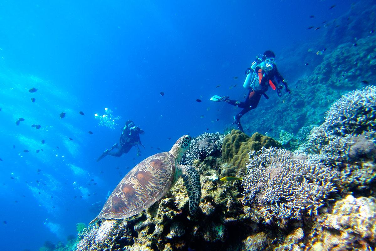 plongée punta cana